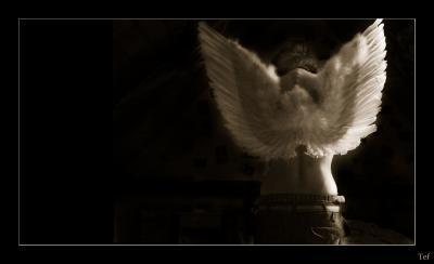 un-ange-passe